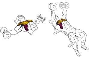 Плюсы упражнений с гантелями
