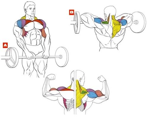 Упражнение тяга к подбородку