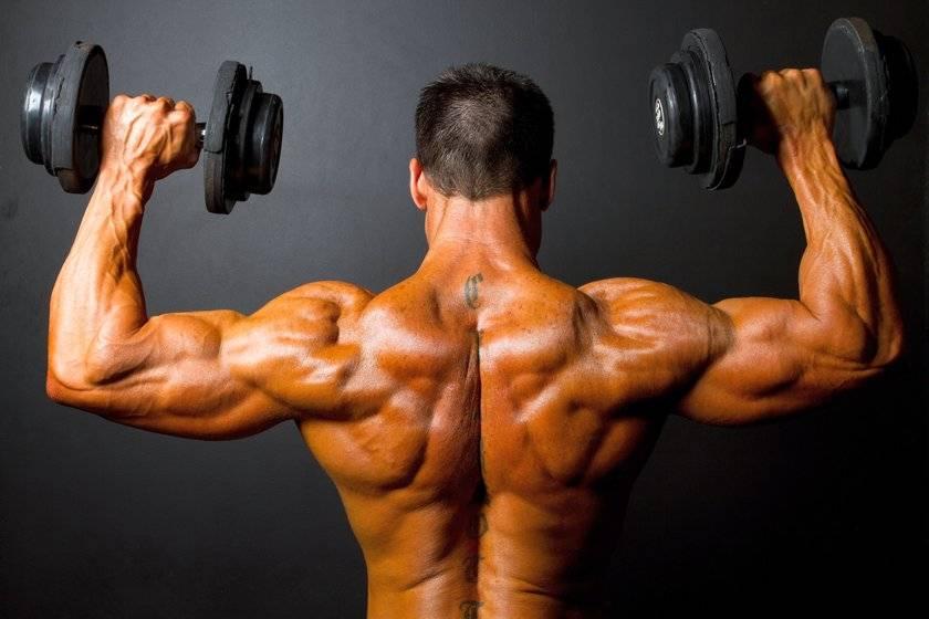 Как накачать плечи (дельтовидные мышцы)? Упражнения и тренировка