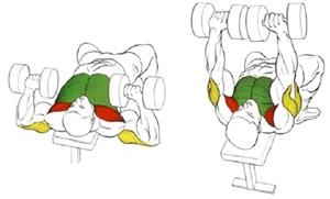 Виды упражнений для груди