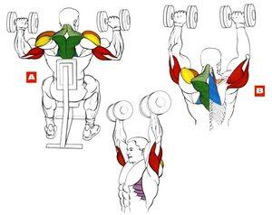 Виды упражнений для трицепса