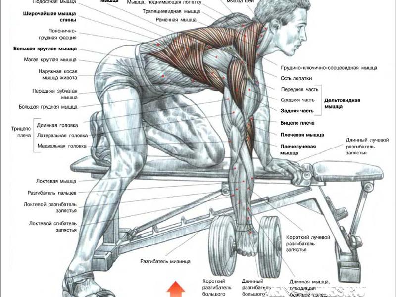Накачивание широчайших мышц спины дома