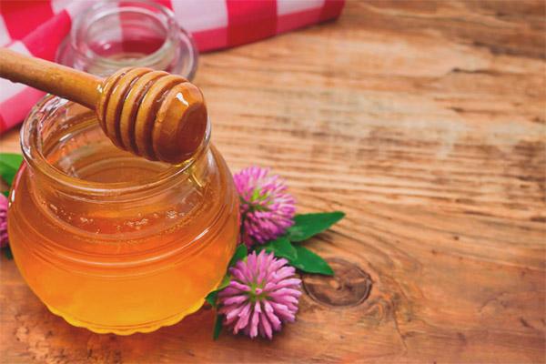 Полезные свойства и противопоказания клеверного меда