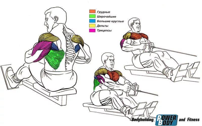 Мышцы, принимающие участие в упражнении