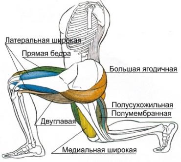 Выпады: какие мышцы работают