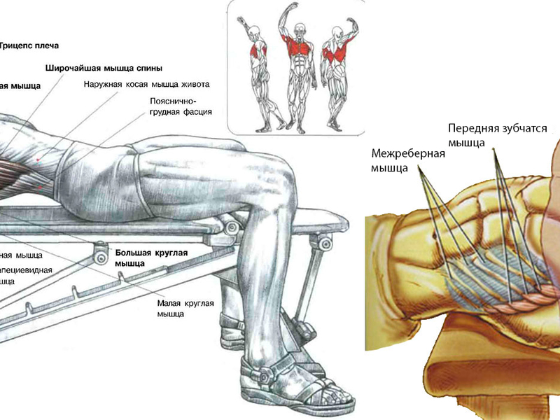 Накачивание грудных мышц гантелями