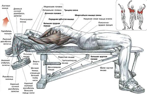 упражнение для тренировки спины