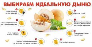 Дыня польза и вред, состав, калорийность