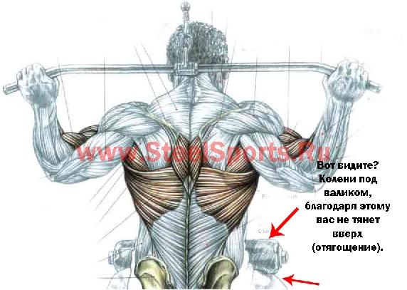 Тяга вертикального блока к груди (колени под валиком)