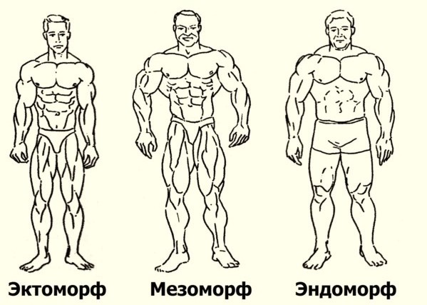 Развитие мышц у разных типов телосложения